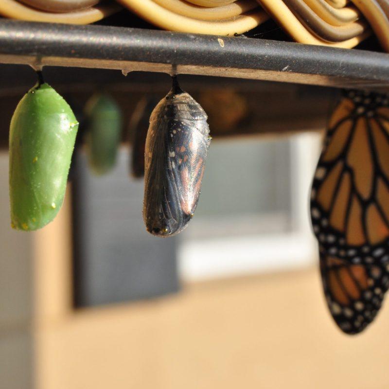 Vlinder groei bij artikel aruna gopal